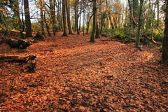 Autumn Carpet (Jane Eery, Dec 17)