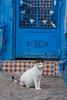 Chefchoan (Letícia Lins) Tags: marrocos chefchoan