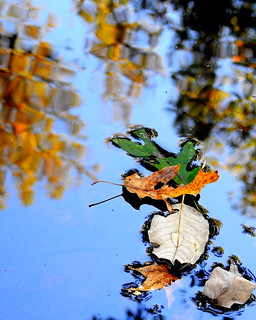 REFLECTIONS- Autumn