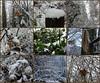 Journée blanche. Snow day. (19.12.2017) (France-♥) Tags: collage snow neige winter hiver vancouver bc canada décembre nature leaf feuille