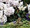 The garden:  Goldfinch, Rhododendron 'Tibet', polyanthus, and Anemone Blanda (ronmcbride66) Tags: goldfinch rhododendron rhododendrontibet polyanthus anemone bloom blossom garden thegarden anemoneblanda finch coth5