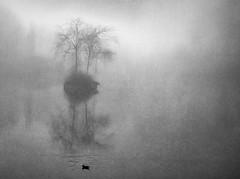 Self Sacrifice (Bill Eiffert) Tags: self sacrifice lonely despair friendship nature silence trees innerworld