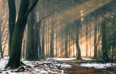 Speulderbos (Guido de Kleijn) Tags: speulderbos veluwe geulders gelderland dutch holland netherlands garderen guidodekleijn nikond500 nikon1680f28 nikon lightrays sunrays sunlight