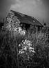 Old Barn (amcgdesigns) Tags: andrewmcgavin skye isleofskye staffin ragwort oldbuildings old monochrome blackandwhite silverefex scotland scottishruin building barn byre