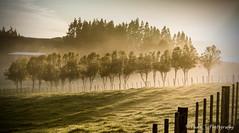 IMG_1603-3 (Paulyt_10) Tags: everettpark newplymouth taranaki newzealand