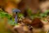 2017_076 (kgorka) Tags: gorkabarreras canon eos7d lowepro manfrotto ucieda cantabria rinconesdecantabria seta macro otoño autumn macrofotografia sigma150f28apoexdgos sigma naturaleza natura