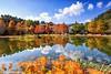Deciduous Cypress ~苗栗~雲水落羽松 (Estrella Chuang 心星) Tags: reflection water clouds estrella 心星 落羽松 倒影 雲 秋葉 森林 植物 sky 風景