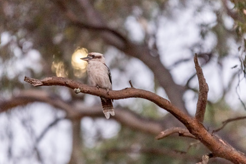 Moonrise Kooka
