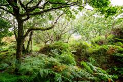 Ireland September 2016 (janeway1973) Tags: irland ireland irisch green beautiful county kerry forest wald dreamy verträumt märchenhaft