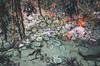 tidepool amazingess (L. Grainne) Tags: californiacoast beachphotography lowtide tidepools starfish seaanemone tidal naturephotography sealife