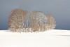 Winter trees (Xtraphoto) Tags: bayerischerwald bayern bavaria landschaft landscape schnee snow bäume trees winter