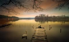 Birds. (augustynbatko) Tags: birds lake landscape water autumn nature sky clouds trees pier