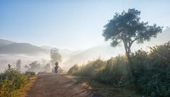 Load Bearers (Padmanabhan Rangarajan) Tags: araku lady walking old load mist sunlight