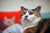 a month has passed (Steve only) Tags: sony nex3 中一光學 中一 zhongyi speedmaster 09535mm 35095 f095 35mm cats e喵