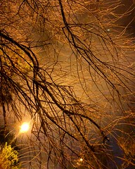 Branches (Eric_G73) Tags:
