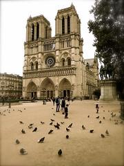 P1350849  PARIS RELIGIEUX     NOTRE DAME DE PARIS    ILE DE LA CITÉ    PARIS 4 (closier.christophe) Tags: pigeons paris iledelacité cathedrale france parvis notredamedeparis religieux églises