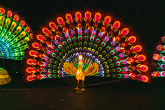 Wild Lights (Strangelove 1981) Tags: 2017 dublinzoo ireland wildlights zoo night lights glow light animals festival peacock multicoloured