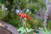 IMG_7487 (jaglazier) Tags: 121717 2017 copyright2017jamesaglazier december ecuador hotels napowildlifepreserve naturepreserves orellana plants flowers gardens parks seedpods