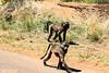 Deux... Two... #03  (In Explore) (Johann (Sasolburg, RSA.)) Tags: baboon bobbejaan kubudrive pilanesberg deux two pspprisesurprisedeuxtwo ef70300mmf456isusm canoneos7dmarkii simplysuperb inexplore explored coth5