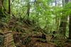 (Erik B) Tags: japan kyushu cedar cedars tree trees yakushima yakusugiland yakusugi forest