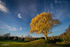 Askim, Norway 0332 - Tree and Moon in Autumn Landscape (Sony A6000, Canon 10-18) (IP Maesstro) Tags: tree moon autumn fall landscape norway askim golf sport sony canon hdr ipmaesstro