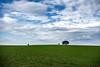 Alentejo (Miguel.Galvão) Tags: landscape 5d fullframe sky grass green blue tree galvão miguel travel portalegre district alentejo portugal wide angle classic paisagem alentejana inverno winter