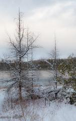 Winter's Arrival (maureen.elliott) Tags: winter snow trees water frozen nature outdoors rural scenery december ontario brucecounty landscape 7dwf dreamy