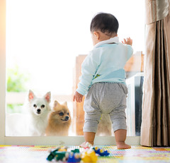 Baby and dog (I love landscape) Tags: dog baby pet home room living boxer little people pets boy funny floor young kid child toddler infant animal friendship human house childhood indoor lying asian asia resting kids fun closeup brown dogs security rest apartment domestic protection friend breed purebred german stand having toddle window door person background cute