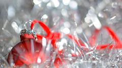 ... Merry Christmas ... (wolli s) Tags: froheweihnachten hmm macromondays memberschoicebokeh merrychristmas mondays weihnachtskugel bauble bokeh bulb choice christmas docoration macro makro members red
