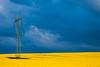 Yellow horizon (Tomasz Mikrut - Photography) Tags: canon eos5d 5d 5 eos mk1 mark1 mark classic 70200mm f40 usm minimalistic yellow field sky poland polska jura calmness composition kompozycja dslr minimalism 70mm 200mm f4 telegraph energy lines fullframe canonef70200mmf40usm canoneos5dmk1classic