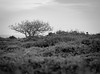 _DSF9829.jpg (stuartiainbond) Tags: mooreland minsmere sea east coast coastal stuart bond fuji xt1 heath heather heathland winter suffolk ocean landscape