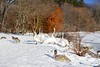 "Canada ""Swan Lake"" (AncasterZ) Tags: swan trumpeter lasallepark burlington canada hamiltonbay lakeontario ef50mmf14usm mc11 a7rm2 a7rii"