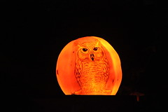 IMG_6564 (comtrag) Tags: jackolanterns rogerwilliamszoo rhodeisland halloween pumpkins pumpkincarving