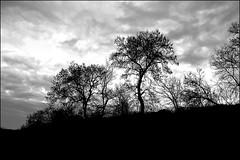 Navarra-Diciembre (Gurutx) Tags: campo euskadi euskalerría nuages nubes atardecer anochecer si sunset ocaso nature nafarroa navarra invierno diciembre sky cielo