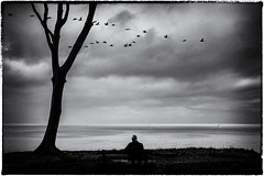 Thoughts flying by (ingrid.lowis) Tags: bw baltic sea ostsee nienhagen gespensterwald melancholie