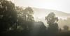 Few more non-winter pictures (Petr Sýkora) Tags: krajina les mlha nature morning fog haze mist trees