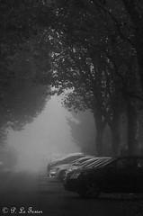 Brouillard sur Villejuif 008 (letexierpatrick) Tags: villejuif france brouillard fog noirblanc noir blanc blackandwhite black white gris rue street arbres extérieur explore nikon nikond7000
