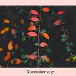 Multicoloured thumbnail