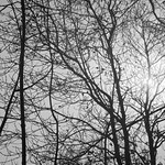 Abstract branches thumbnail