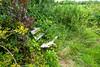 Nature strikes back (Nelleke C) Tags: 2017 bloemdijkenvanzuidbeveland zeeland calcareous dijk dike kalkrijk landscape landschap nederland netherlands