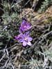 Flora - Arizona - Yavapai County (Mike's Mode (Miguel H.)) Tags: flora desert arizona cactus cholla yucca agave mammillaria echinocereus flores flowers