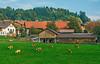 Village Farm (fotofrysk) Tags: homes farm cattle green woods forests village austriancountrysideviennasalzburgtrain viewfromthetrain railjet easterneuropetrip vienna austria wien oesterreich sigma1750mmf28exdcoxhsm nikond7100 201709277508