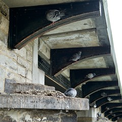DSC_1826 (AperturePaul) Tags: mechelen belgium europe nikon d600 city square format squareformat bridge pigeons pigeon old historic