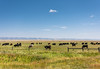 ranch lands (Sky Noir) Tags: big sky wide open spaces wy wyoming west ranch