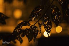 _MG_8889 - e t (Daniel Jiménez Fotógrafo) Tags: hoja autumn otoño noir getdark lateafternoon lights bokeh pdc doc detail detalle macro macrophotography macrofotografia macrophoto orange amarillo yellow agujero danifotografia danieljimenezfotowixcomportfolio danieljg winter navidad christmas