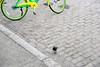 8H2_78610185 (kofatan (SS Tan) Tan Seow Shee) Tags: usa seattle starbucks1912 publicmarket farmermarket emeraldcitytour argosycruises redindian safecofield boeing pikesplacemarkettilicumvillage tacomaairport kofatan sstan