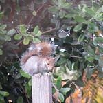squirrel 12 19 17 thumbnail