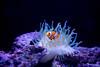 Sumida Aquarium (PhilliB123) Tags: sumida aquarium sony uminonakamichi world marine a7ii zeiss 35mm osaka kaiyukan f14 distagon japan tokyo fukuoka underwater fish life travel holiday sea ocean animals