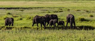 Chobe National Park (XXX)