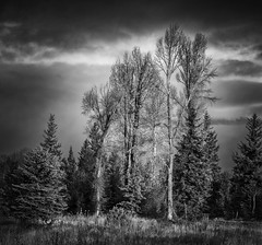 trees along the Snake River (marion faria) Tags: grandtetonnationalpark tetons snakeriver clouds copse wyoming